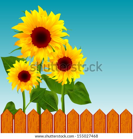 Flower sunflower on the background of the wooden fence vector illustration of summer