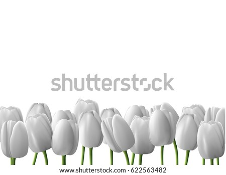 flower tulip realistic isolated