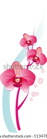 Flower vector background brochure template. Set of floral cards