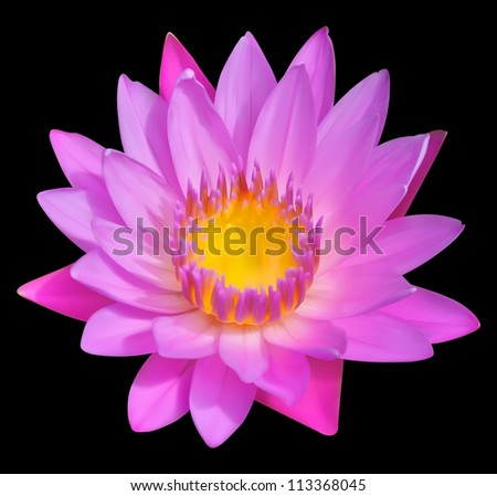 flower vector icon  blossom of