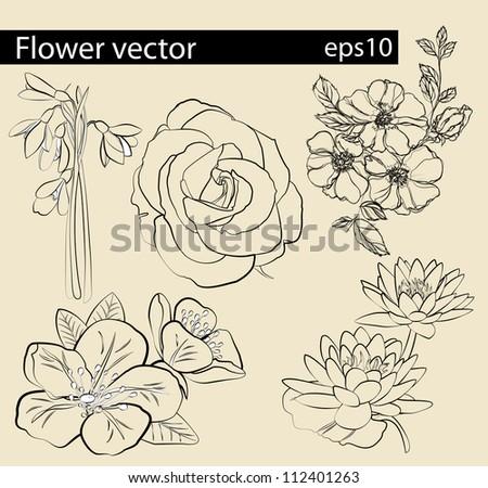Flower vector set | Editable Illustration