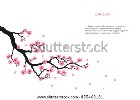flowering branch of sakura on a