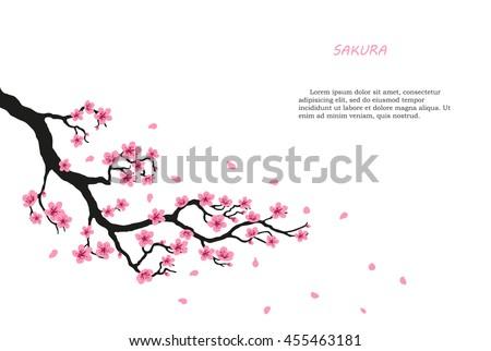 flowering branch of sakura on a