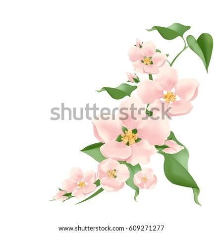 flowering branch vector pink