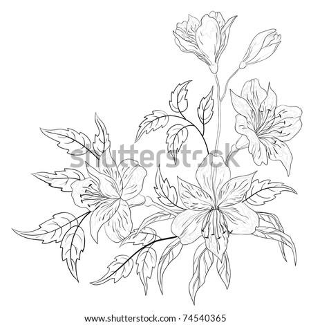 Flowers alstroemeria, vector, monochrome contours on a white background