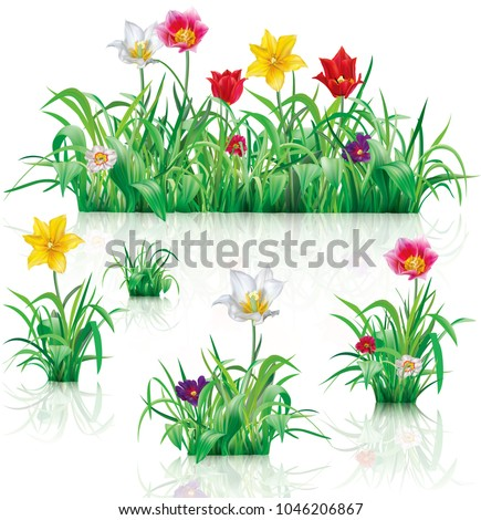Flowers and green grass on a white background. Vector illustration #1046206867