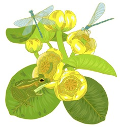Flowers and leaves of yellow water Lily, nuphar lutea, dragonfly and frog, plants and animals of pond and lake, vector illustration