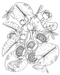 Flowers and leaves of yellow water Lily, nuphar lutea, dragonfly and frog, plants and animals of pond and lake, black and white illustration for coloring, vector