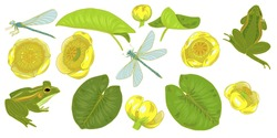 Flowers and leaves of yellow water Lily, nuphar lutea, dragonfly and frog, plants and animals of pond and lake, set of elements, vector illustration
