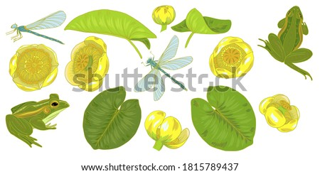 Flowers and leaves of yellow water Lily, nuphar lutea, dragonfly and frog, plants and animals of pond and lake, set of elements, vector illustration stock photo