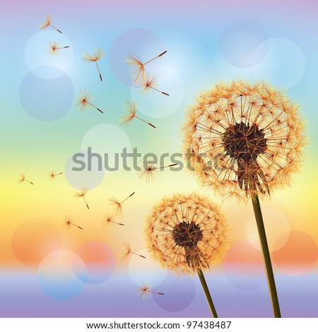 Flowers dandelions on background of sunset. Light nature background, vector