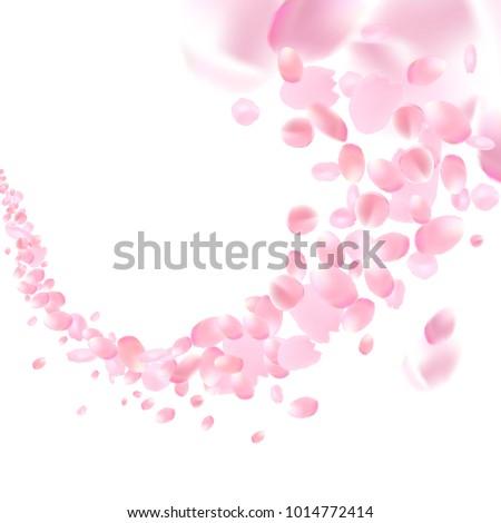 Flowers design. Flowers petals wallpaper. Sakura flying petals isolated on white background. Petals Roses Flowers. Vector illustration