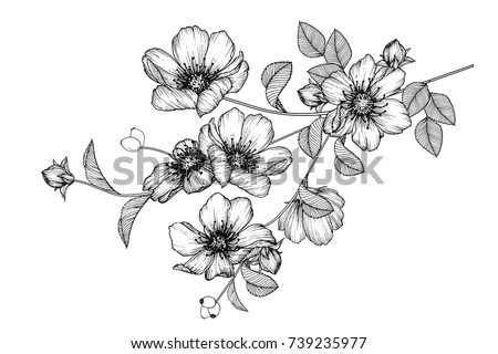 Flowers drawing with line-art on white backgrounds. #739235977