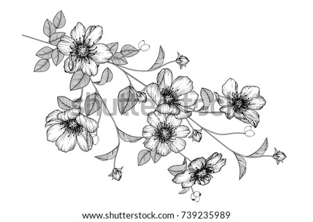 Flowers drawing with line-art on white backgrounds. #739235989