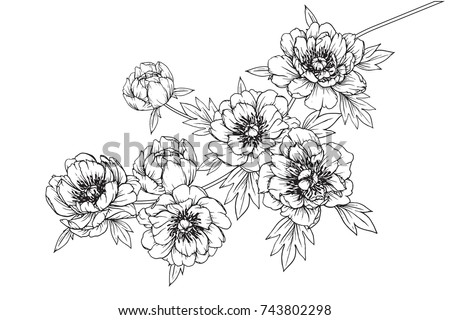 Flower drawings download free vector art stock graphics images flowers drawing with line art on white backgrounds mightylinksfo