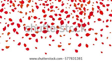 flowers petals falling on