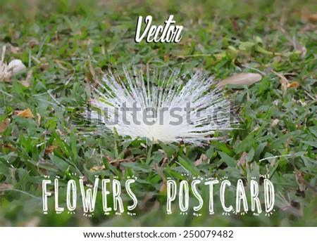 flowers postcard. Grass and flower.