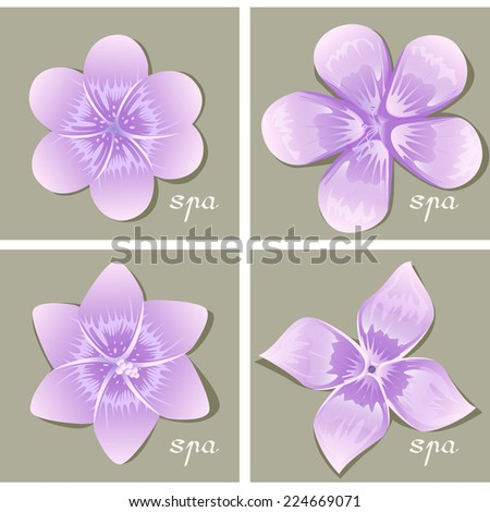 flowers set   isolated on gray