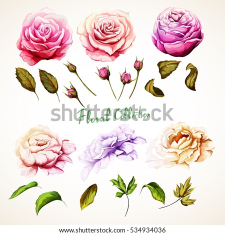 flowers set of  rose  peony