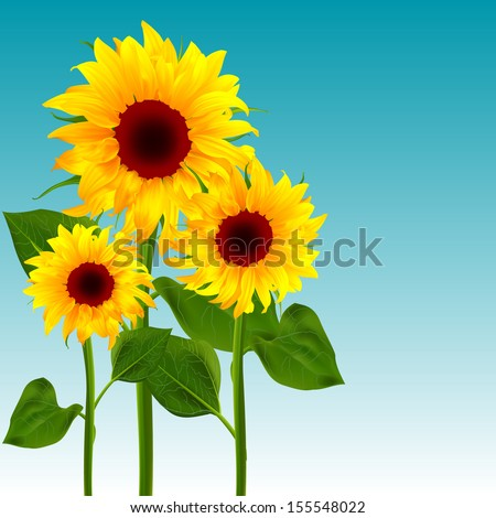 Flowers sunflower vector illustration of summer