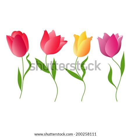 Flowers tulips. Vector illustration.