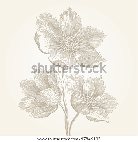 flowers, vintage engraved illustration
