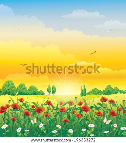 flowery meadow with poppies