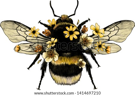 fluffy bumblebee in yellow top view with wings, sketch vector graphics color illustration on white background Stock photo ©