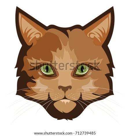 fluffy ginger cat  isolated on