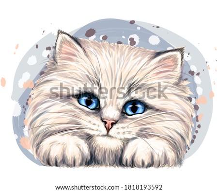 fluffy kitten wall sticker