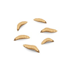 Fly maggot insect set isolated on white background, fishing lure 3d realistic vector illustration, crawling fly larvae bait for fishing