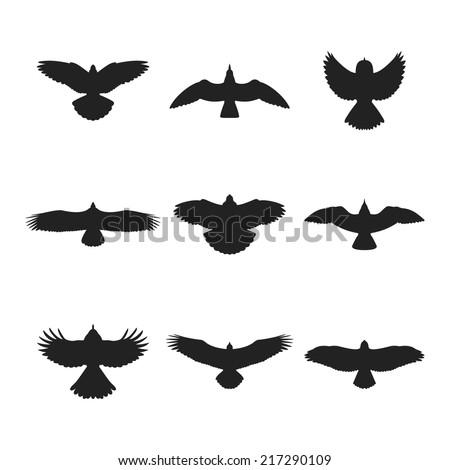 flying bird like eagle sparrow