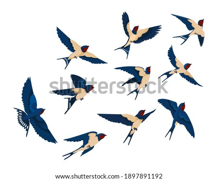 Flying bird various view collection set. Flock of swallows isolated on white background. Vector illustration for nature, wildlife, animal, ornithology concept Stock photo ©