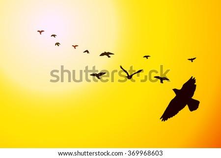 flying birds at sunset vector