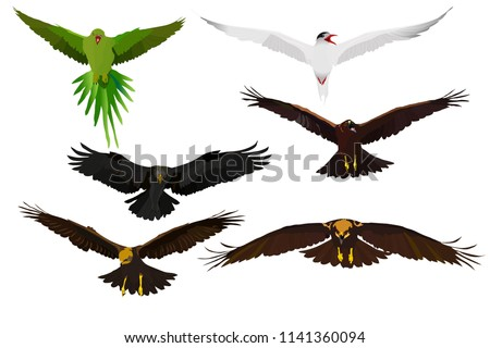 Flying birds. Birds landing. Vector images. Parrot, Tern, Eagle and hawks. White background.