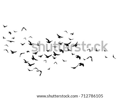 flying birds decoration