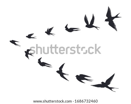 Flying birds flock silhouette. Swallows, sea gull or marine birds isolated on white background. Vector bird icon set flock flying in sky Foto stock ©