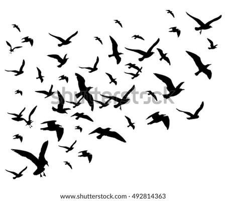 flying birds flock vector
