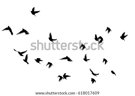 flying birds in the sky vector