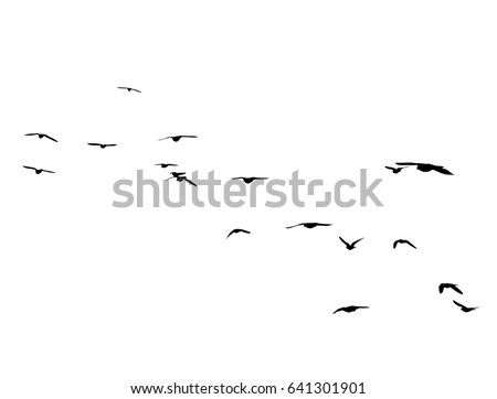 flying birds silhouettes on