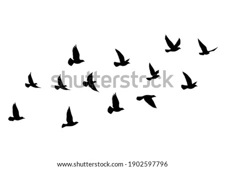 Flying birds silhouettes on white background. Vector illustration. isolated bird flying. tattoo design.