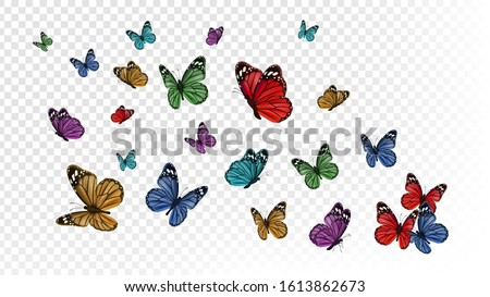 flying butterflies colorful