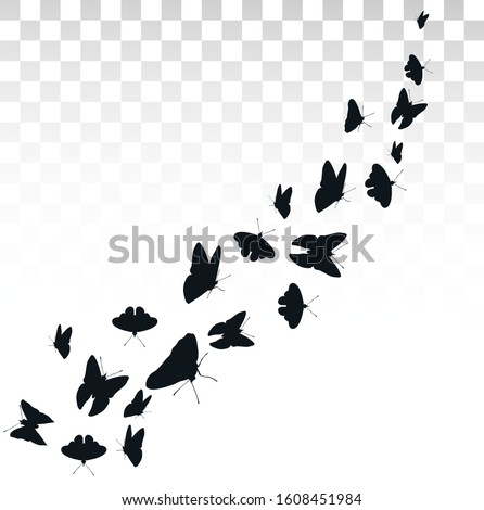 flying butterflies isolated on