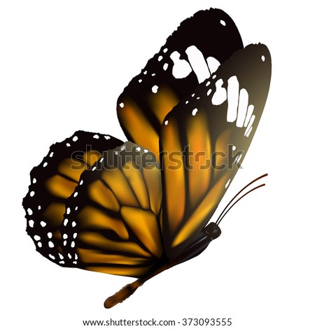 flying butterfly isolated on