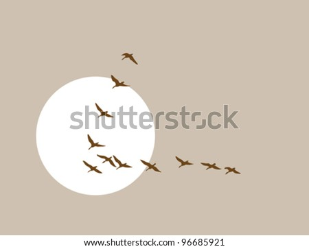 flying ducks silhouette on solar background, vector illustration