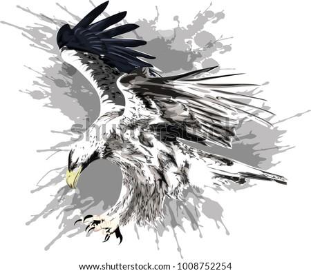 Golden Circle Eagle Badge Vectors Download Free Vector Art Stock