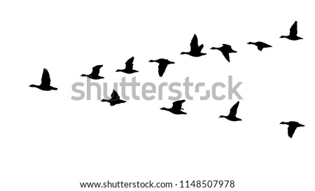 Flying flock of geese in the autumn, triangle of birds in the sky (12 different silhouettes of birds)