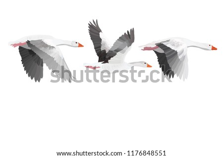 Flying Gooses. Vector image. White background.