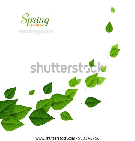 flying green leaves on white