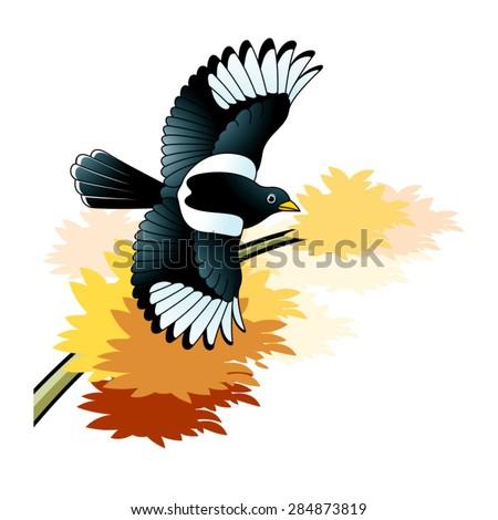 flying magpie bird over autumn